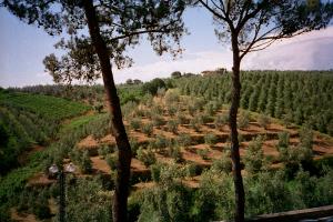 Tuscany97_60